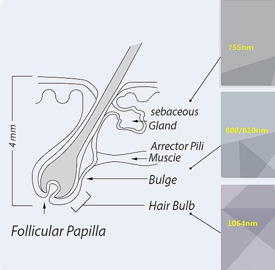 биолазер